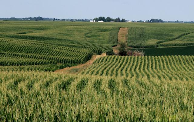 south africa farming